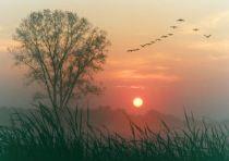 Fall.Sunrise