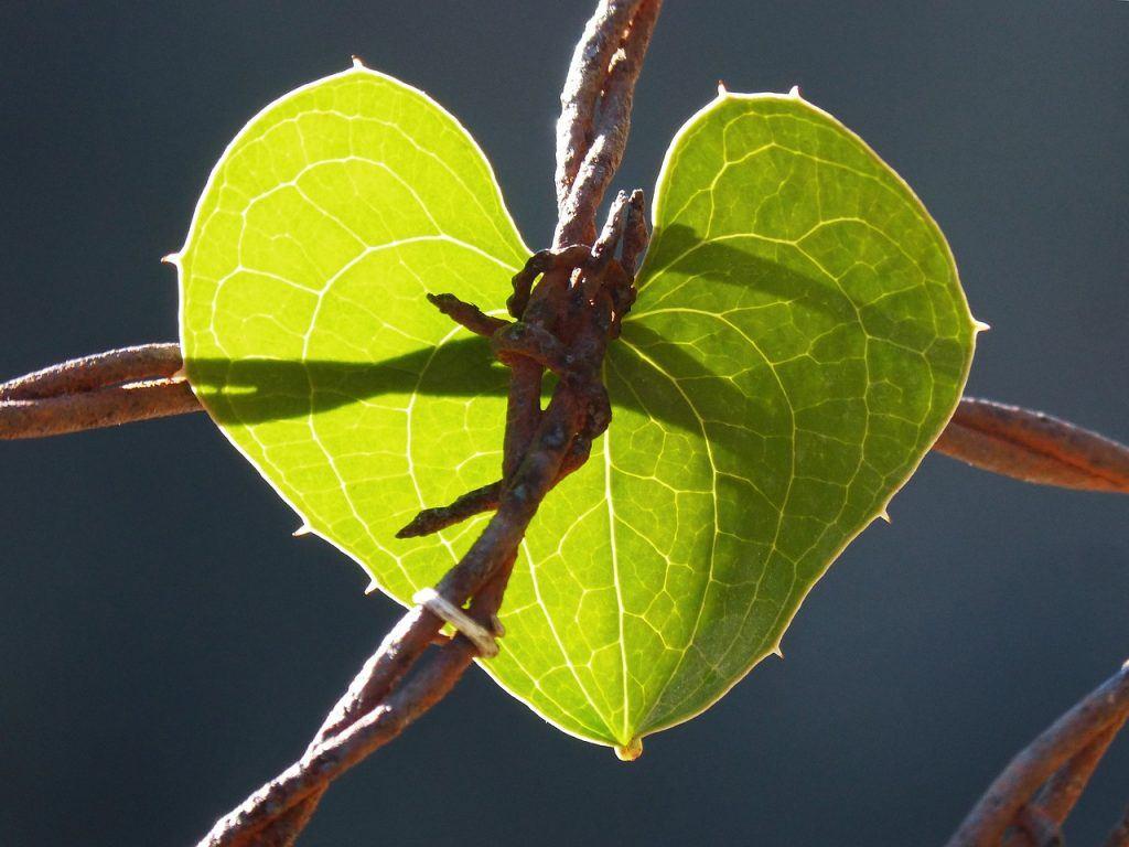 a leaf going through trauma